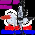 """25007  Pelican 26""""    Bird Spinners (25007)"""