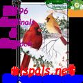 56496  Cardinal & Hemlock : Premier Illuminated Garden Flag (56196)