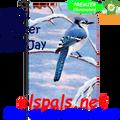 56191  Winter Blue Jay : Garden Flag by Premier Illuminated (56191)