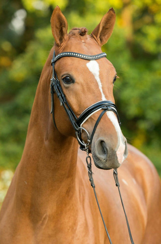 A wave browband can accentuate the horse's head carriage.  Selecting the the crystal color will also add to the enhancement.
