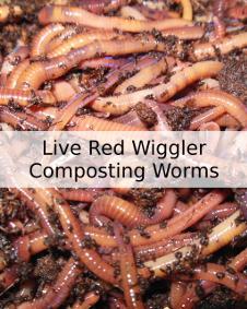 Shop Worm Composting Bins