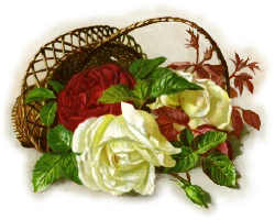 red-white-roses-basket.png