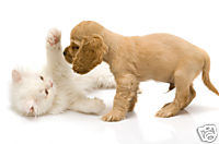 young-puppy-with-kitten.jpg
