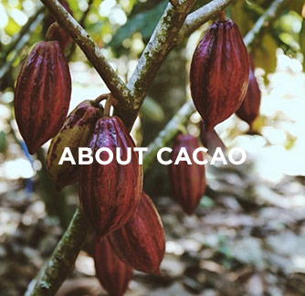 home-tile-aboutcacao.jpg