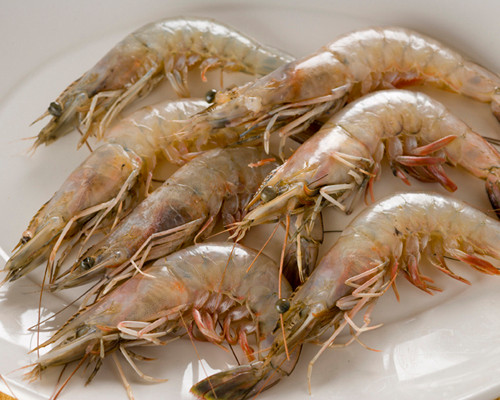 Louisiana Jumbo Shrimp Fresh - Bing images