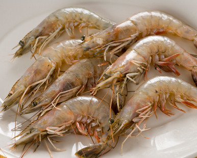 Fresh Louisiana Shrimp