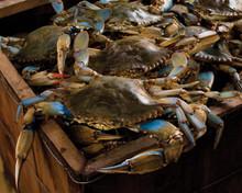 Hamper of Live Lousiana Blue Crabs