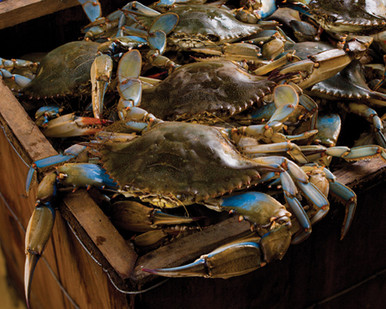 Hamper of Live Lousiana Blue Crabs