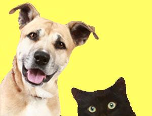 Pet Emergency Supplies