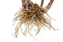 Valerian Root Essential Oil