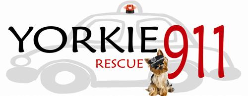 yorkie 911 rescue