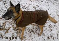 NY Sport Dog Coat | Chocolate