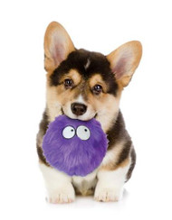 Go Dog Furballz Purple Dog Toy