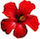 hibiscus-small.png