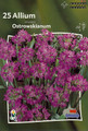 Allium Ostrowskianum pink 25_bulbs