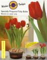hydrophonic tulips