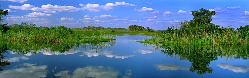 everglades-national-park-inhabitants.jpg