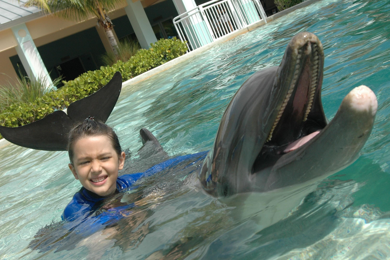 Dolphin Odyssey | Miami Sea Aquarium