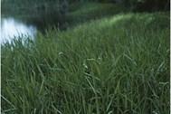 various-grasses.jpg