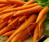 Carrot Danvers Daucus Carota Seeds