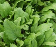 Spinach Hybrid 7 Spinacia Oleracea Seeds