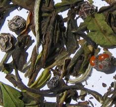 Organic Schizandra White Tea