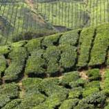 Ceylon Teas