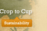 Sustainable from Crop to Cup