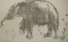 Elephant - Artist Proof