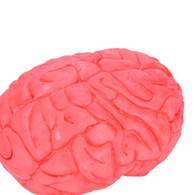 Human Brain Organ Body Part Halloween Horror Prop