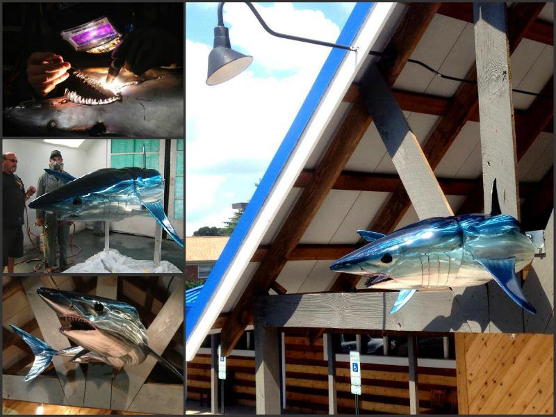 collage-shark.jpg
