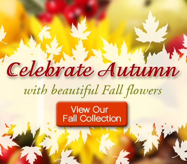 fall-banner.png