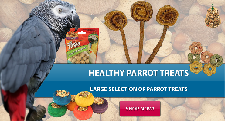Healthy Parrot Treats