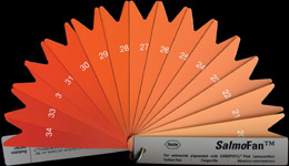 Salmon Color Fan