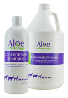 Aloe Advantage Concentrated Shampoo  10x