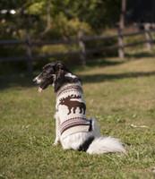 Ethical Moose Dog Sweater