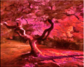 Japanese Maple by Artist McKenzie