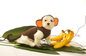 Hooded Monkey Pet Costume