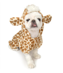 Jungle Giraffe Pet Costume