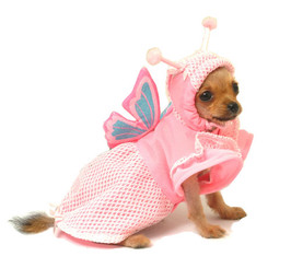 Madam Butterfly Pet Costume