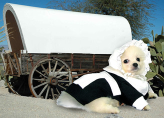 Pilgrim Girl Pet Costume