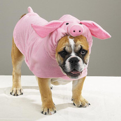 Piggy Pooch Pet Costume
