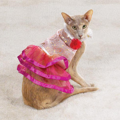 Princess Cat Costume