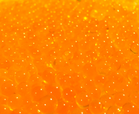 Fishheads Speckled Trout Roe