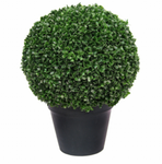 Boxwood Ball In Pot