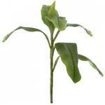 Banana Leaf Stems