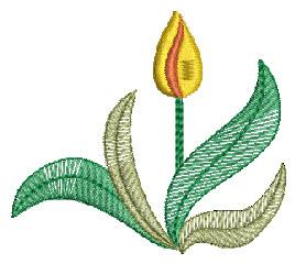 single-tulip.jpg