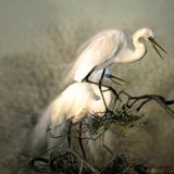 charlene-dejori-nested-egrets-icon.jpg
