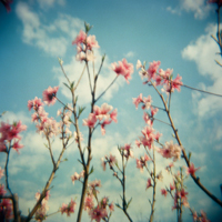 flowers-artmuse.jpg