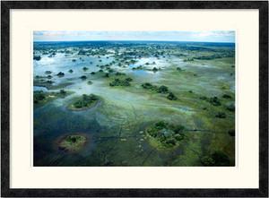 Okavango Delta | Charlene deJori | Ebony frame